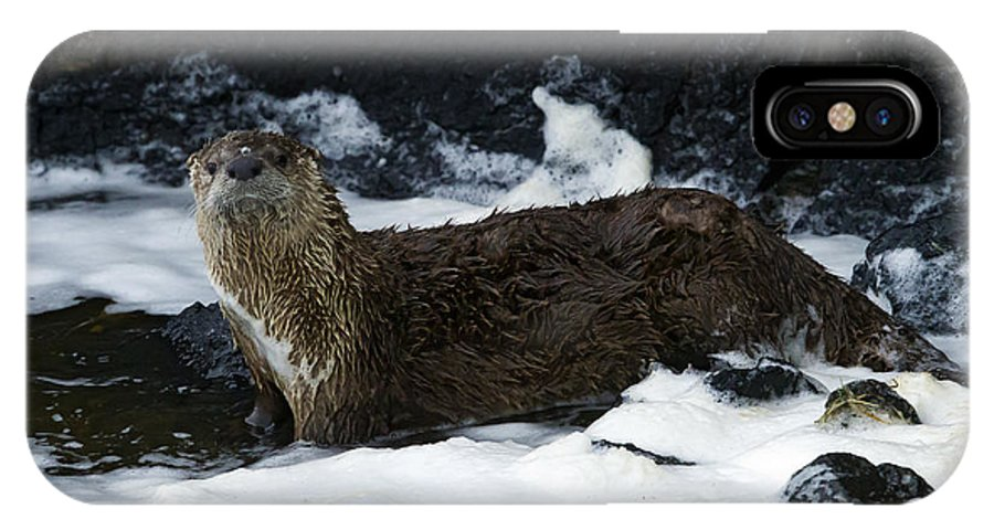 Otter IPhone X Case featuring the photograph River Otter  #0978 by J L Woody Wooden