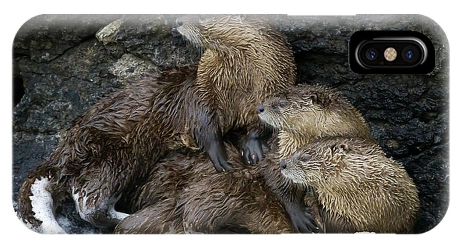 Otter IPhone X Case featuring the photograph River Otter Trio  #0931 by J L Woody Wooden