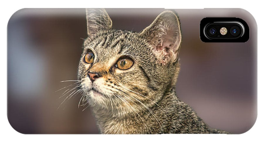 Domestic Cat IPhone X Case featuring the photograph River Rose by Mary Almond