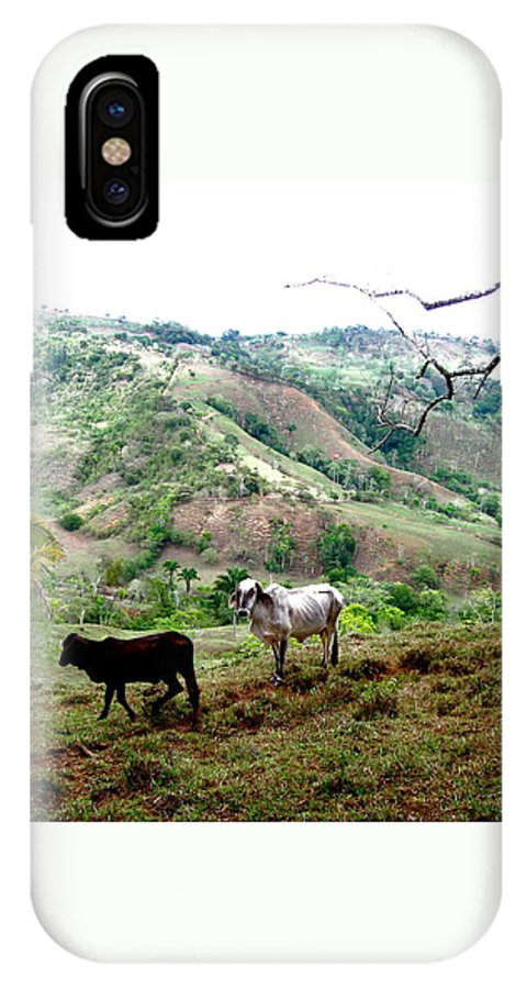 Cattle IPhone X Case featuring the photograph Rolling Hills by Hilari Alsip