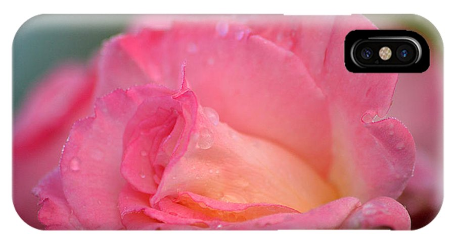 Rose IPhone X Case featuring the photograph Rose Beauty by Marsha Schorer