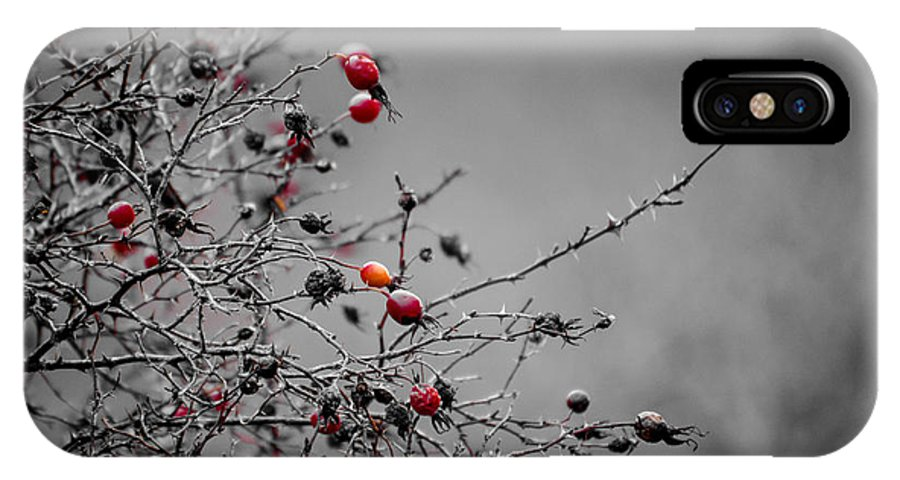 Rose Hip IPhone X Case featuring the photograph Rose Hip Red by Roxy Hurtubise