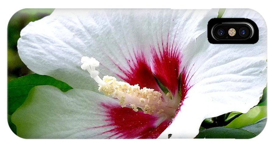 Hibiscus IPhone X Case featuring the photograph Rose Of Sharon # 2 by Melissa Bittinger