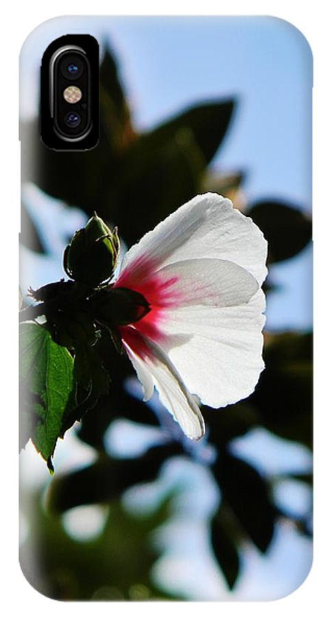 Flower IPhone X Case featuring the photograph Rose Of Sharon At Dusk by Jean Goodwin Brooks