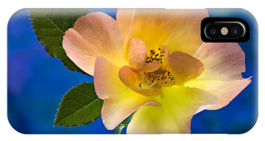 Rose IPhone X Case featuring the photograph Rose Portrait by Jean Noren