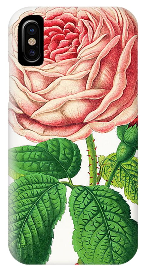 Rosa Sp. IPhone X Case featuring the photograph Rose by Sheila Terry