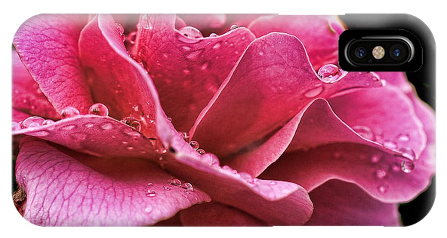Rose IPhone X Case featuring the photograph Rose by Sherry Williamson