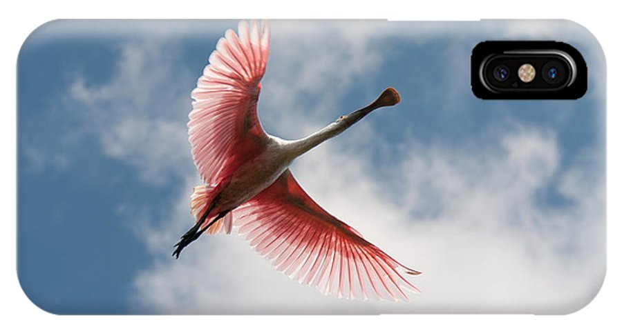 Roseate IPhone X Case featuring the photograph Roseate Soaring by Paul Rebmann