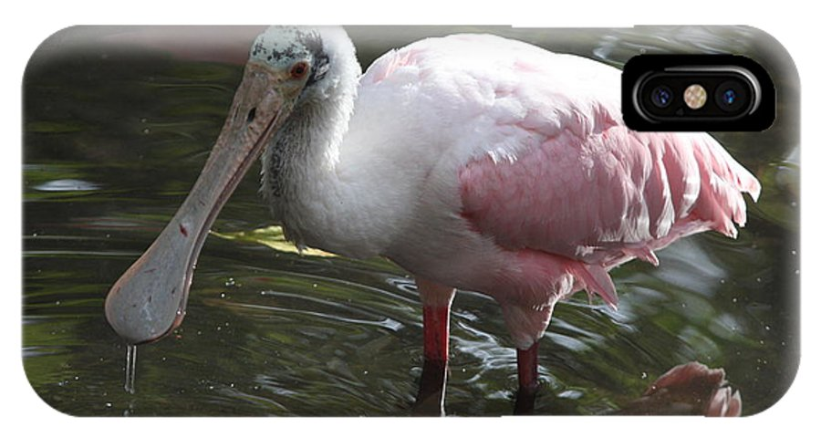 Roseate Spoonbill IPhone X Case featuring the photograph Roseate Spoonbill by Christiane Schulze Art And Photography