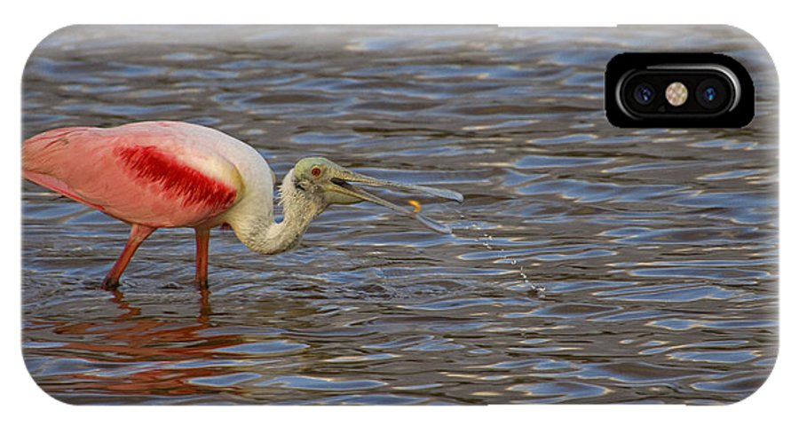 Roseate Spoonbill IPhone X Case featuring the photograph Roseatr Spoonbill  #4756 by J L Woody Wooden