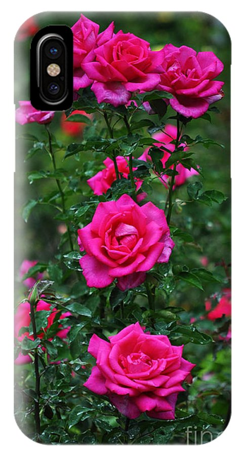 Pink Roses IPhone X Case featuring the photograph Roses In The Garden by Mary Machare