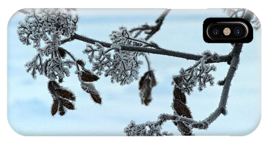 Finland IPhone X Case featuring the photograph Rowan In Winter by Jouko Lehto