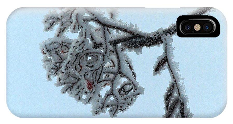 Finland IPhone X Case featuring the photograph Rowan by Jouko Lehto