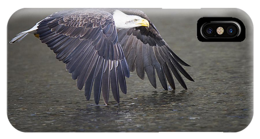 Bald Eagle IPhone X Case featuring the photograph Rowing The River by Quynh Ton