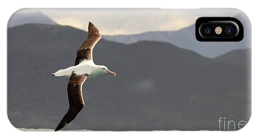 Behavior IPhone X Case featuring the photograph Royal Albatross Flying Among Mountains by Max Allen