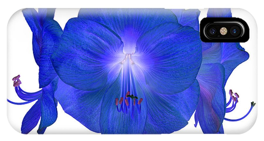 Blue IPhone X Case featuring the photograph Royal Blue Amaryllis On White by Rosemary Calvert