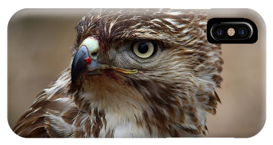 Red-tailed Hawk IPhone X / XS Case featuring the photograph Rth After Lunch by MCM Photography
