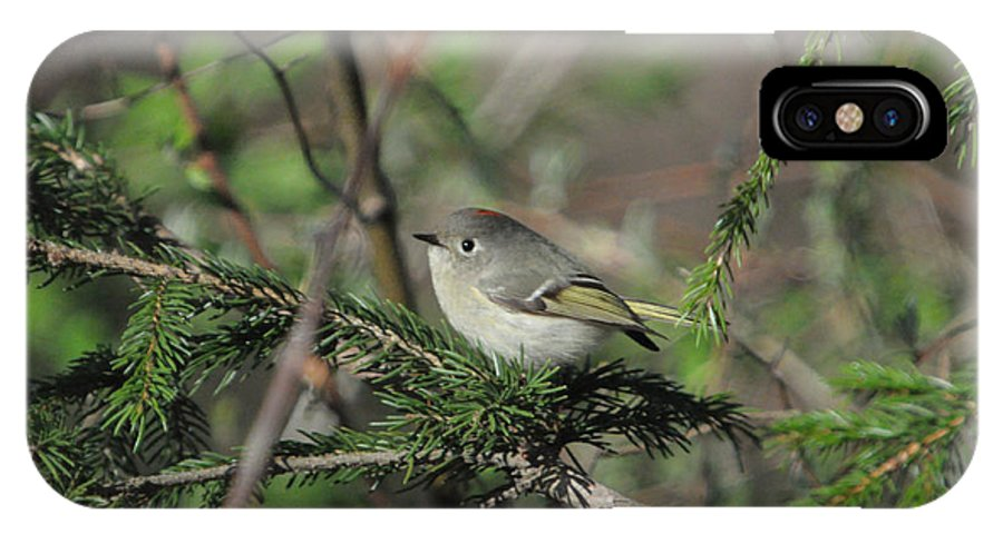 Ruby-crowned Kinglet IPhone X Case featuring the photograph Ruby-crowned Kinglet by Jeff Picoult
