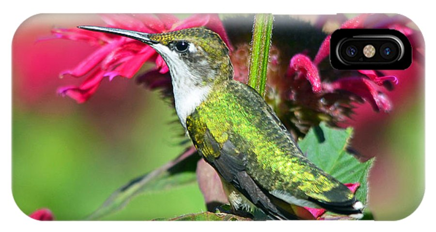 Bird IPhone X Case featuring the photograph Ruby Throated Hummingbird Female by Rodney Campbell