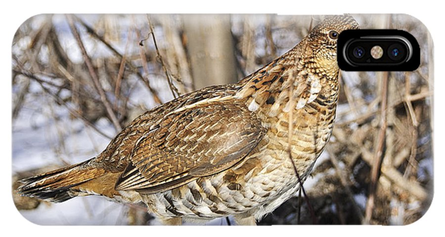 Ruffed Grouse IPhone X Case featuring the photograph Ruffed Grouse On Snowy Log by Timothy Flanigan