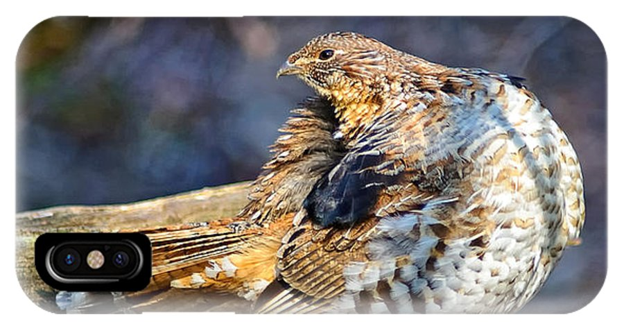 Ruffed Grouse IPhone X Case featuring the photograph Ruffed Grouse Preening by Timothy Flanigan