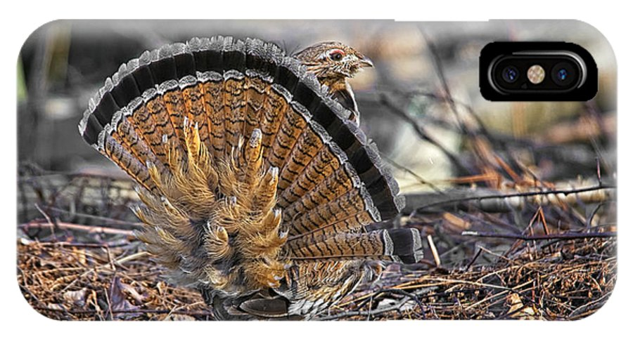 Ruffed Grouse IPhone X Case featuring the photograph Ruffed Grouse Rear Strut by Timothy Flanigan