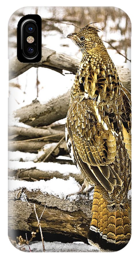 Ruffed Grouse IPhone X Case featuring the photograph Ruffed Grouse Rear View by Timothy Flanigan