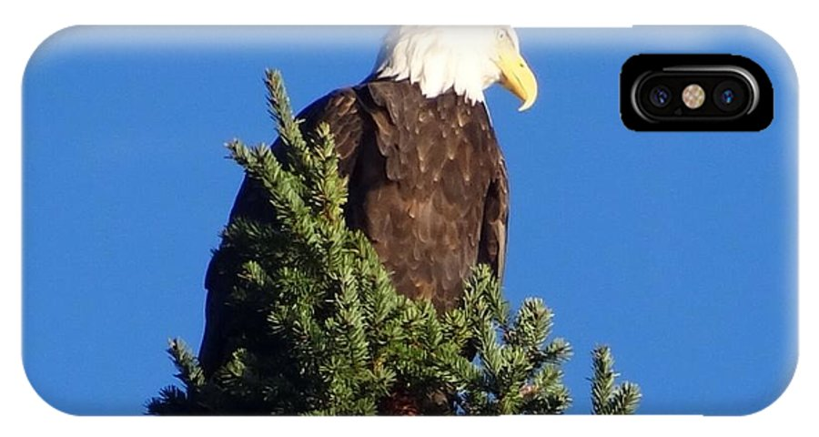 Bald Eagle IPhone X Case featuring the photograph Ruffled Feathers by Glenda L Nikirk