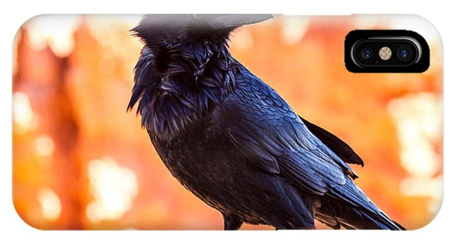 James Marvin Phelps Photography IPhone X Case featuring the photograph Ruffled Feathers by James Marvin Phelps