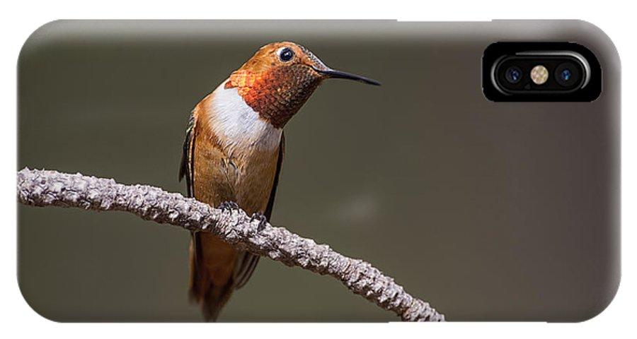 Hummingbird IPhone X Case featuring the photograph Rufous Hummingbird by Robert Monsipapa