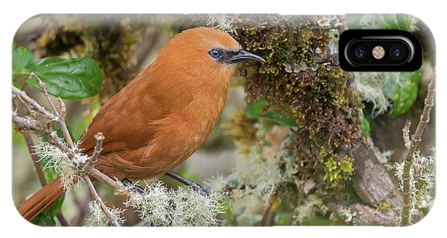 Birds IPhone X Case featuring the photograph Rufous Wren by Juan Jose Arango