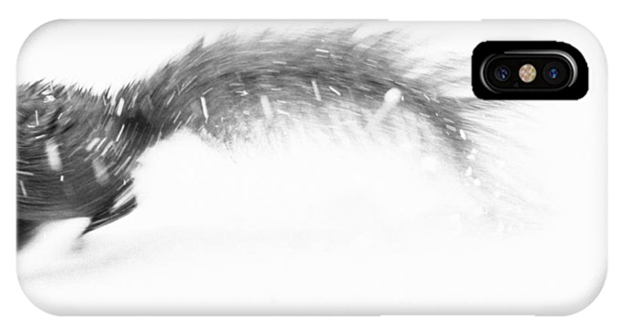 Squirrel IPhone X Case featuring the photograph Run Away by Pati Photography