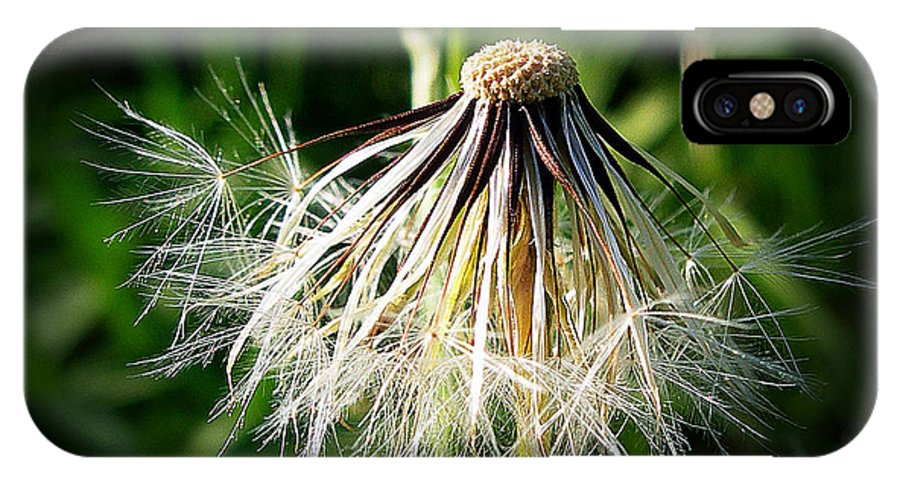 Composite IPhone X Case featuring the photograph Salsify by Judi Bagwell
