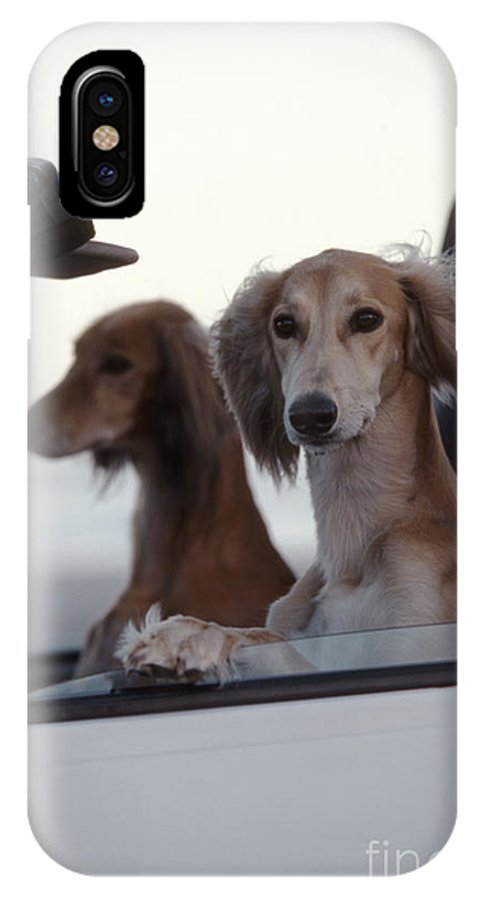 Saluki IPhone X / XS Case featuring the photograph Saluki Dogs In Car by Chris Harvey