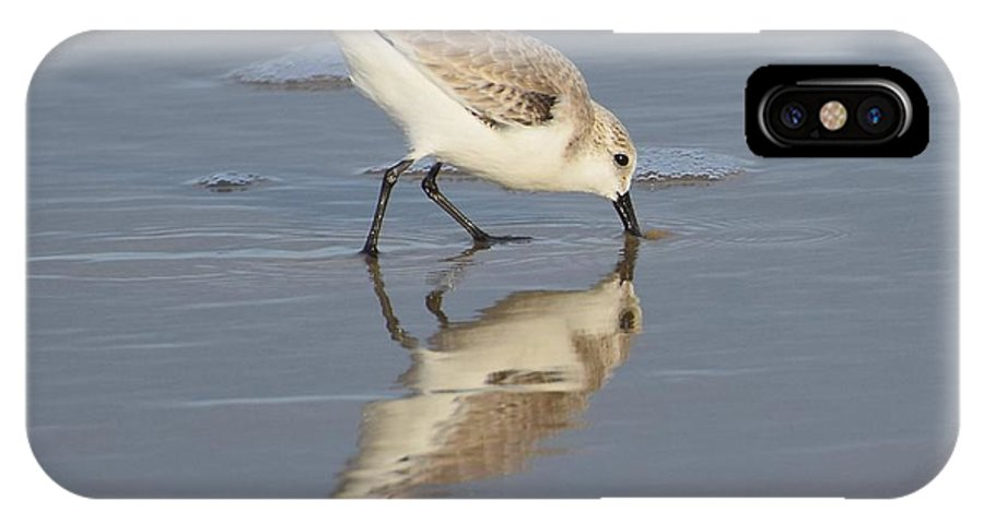 Sanderling IPhone X / XS Case featuring the photograph Sanderling by MCM Photography