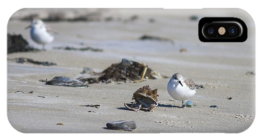 Sanderlings IPhone X Case featuring the photograph Sanderlings 2 by Shane Borelli