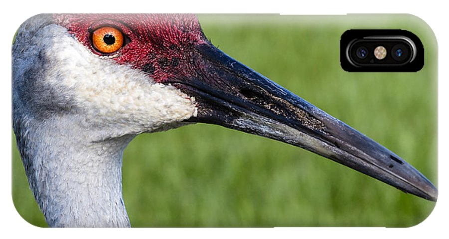Bird IPhone X Case featuring the photograph Sandhill Crane Portrait by Zina Stromberg