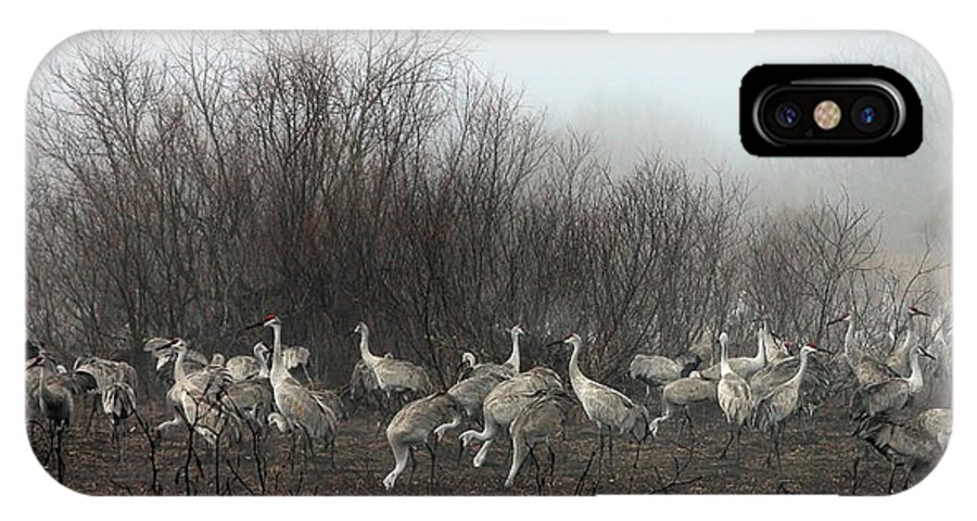 Sandhill IPhone X Case featuring the photograph Sandhill Cranes In The Fog by Farol Tomson