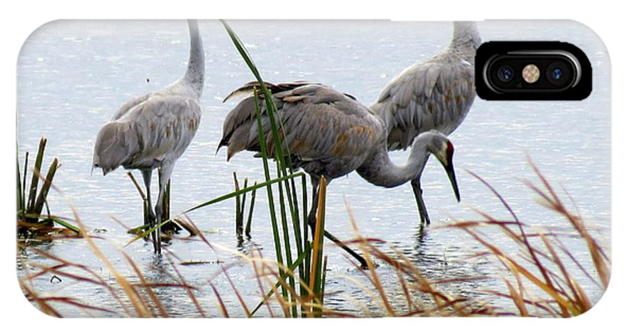 Nature IPhone X Case featuring the photograph Sandhill Cranes by Kay Novy