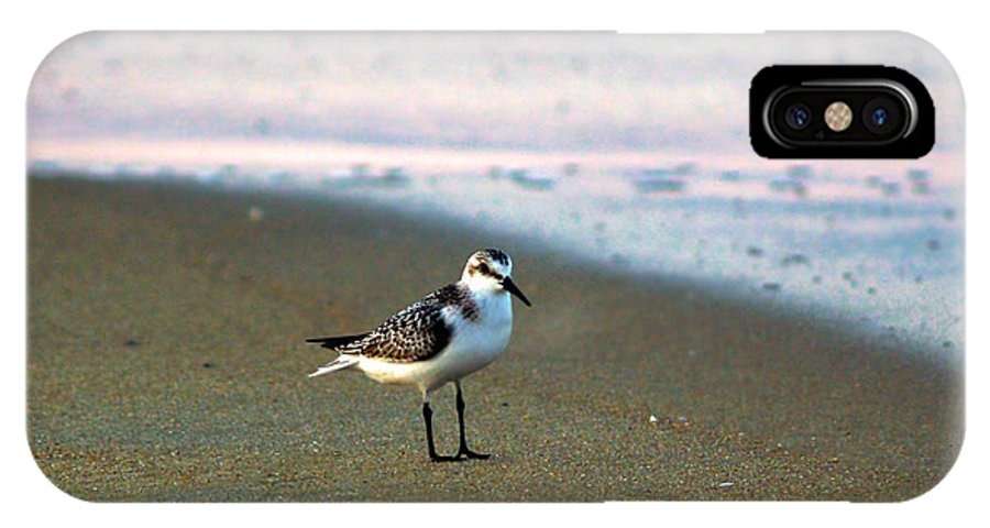 Bird Photography IPhone X Case featuring the photograph Sandpiper by Patricia Griffin Brett