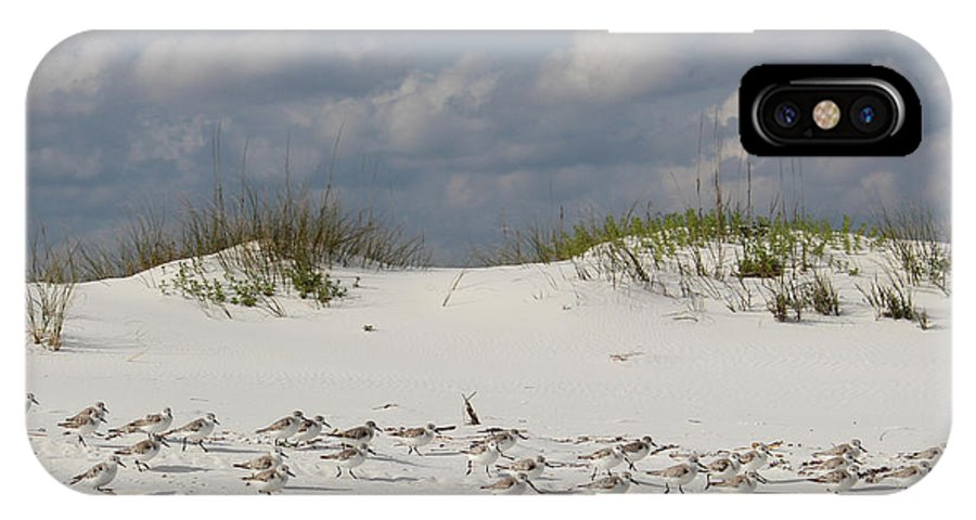 Sandpipers IPhone X Case featuring the photograph Sandpipers On Dune by Dajana Haggard