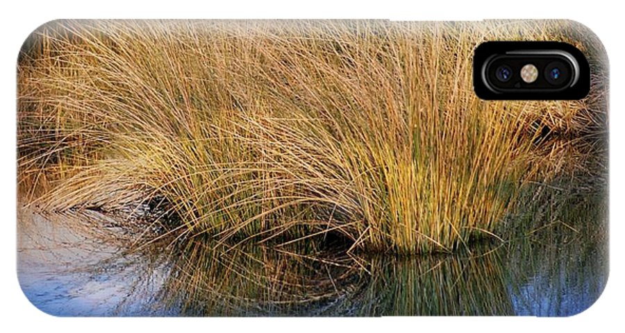 Grass IPhone X Case featuring the photograph Sawgrass by Marty Koch