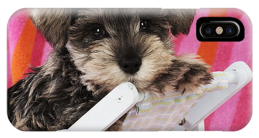 Schnauzer IPhone X / XS Case featuring the photograph Schnauzer Puppy Looking Over Top by John Daniels