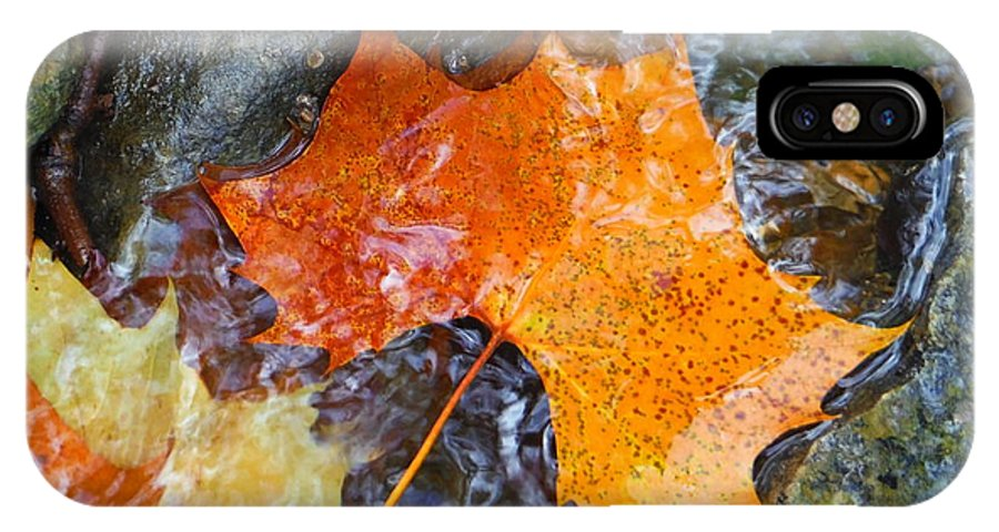 Scioto River Leaves Series IPhone X Case featuring the photograph Scioto River Leaves Series 1 by Paddy Shaffer