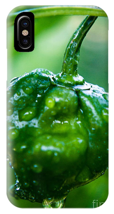 Jamaica IPhone X Case featuring the photograph Scotch Bonnet Peppers by Kenroy Rhoden