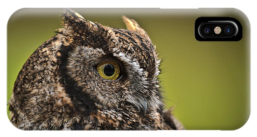 Screech Owl 1 IPhone X Case featuring the photograph Screech Owl 1 by Wes and Dotty Weber
