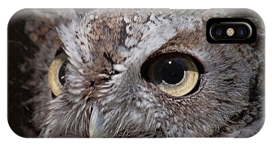 Screech Owl IPhone X Case featuring the photograph Screech Owl by Frank Piercy