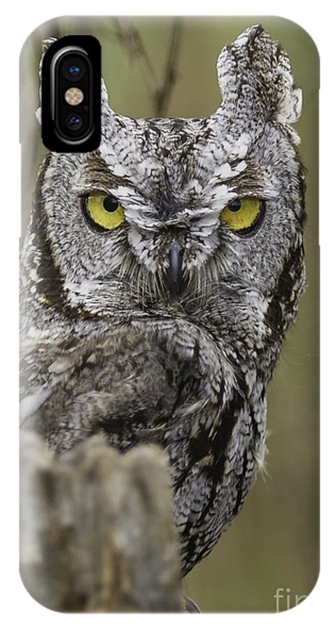 Bird Of Prey IPhone X / XS Case featuring the photograph Screen Owl by Michael Goodell