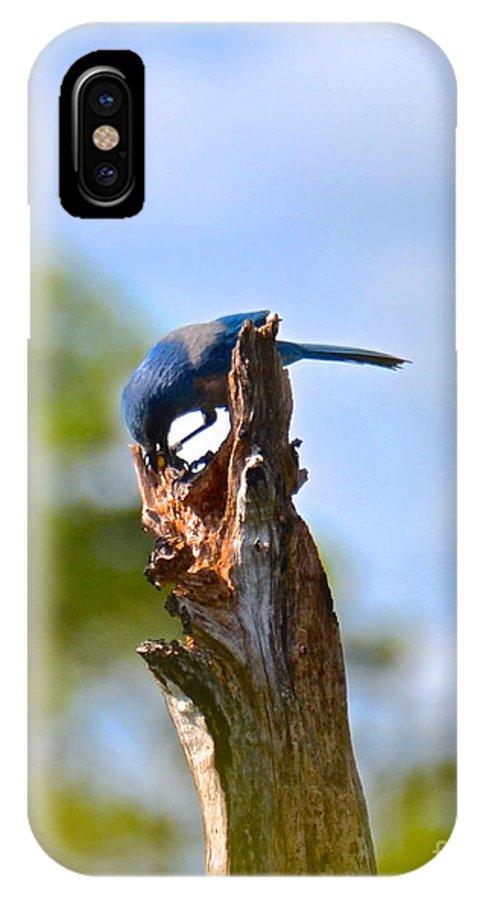 Bird IPhone X Case featuring the photograph Scrub Jay by Carol Bradley