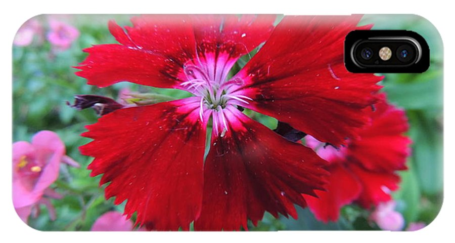 Red IPhone X Case featuring the photograph Scruffy by Natasha Anderson